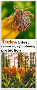 Ticks: bites, removal, symptoms, protection