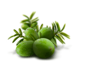 bija fruit from innisfree site