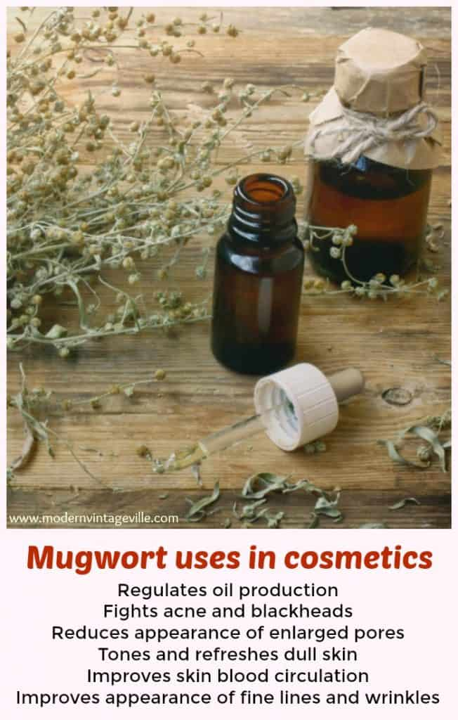 Mugwort is an edible and medicinal plant that use used in cosmetics and skincare. Recipes of mugwort oil, masks and creams.