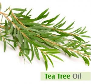 tea tree oil for hair
