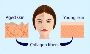 skin collagen anti aging