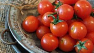 anti aging tomatoes